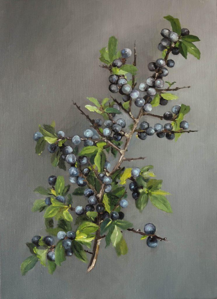Une-branche-de-prunellier