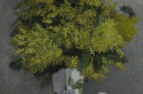 Mimosa dans un vase